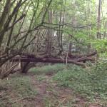 Kleine Urwaldstruktur