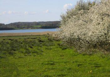 Begehung des Schutzgebietes Südliche Schlei von Winnemark bis Bienebek durch das SIEZ<sup>®</sup>