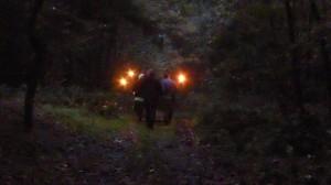 Rückweg durch den Missunder Wald