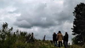 Schwalben und Mauersegler jagen Mücken über dem sandigen Acker