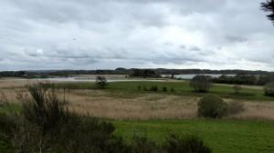 Schilfgebiet der Schoolbek und Homer See im Hintergrund