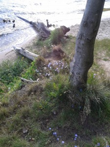 Vegetation an der Kliffkante