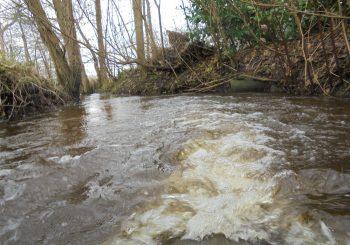 Norbyer Au bei Hochwasser.