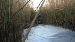 Grenzgraben-Hakenhöft Seit drei Jahren finden wir dort Abwasserpilze wie im Lehrbuch